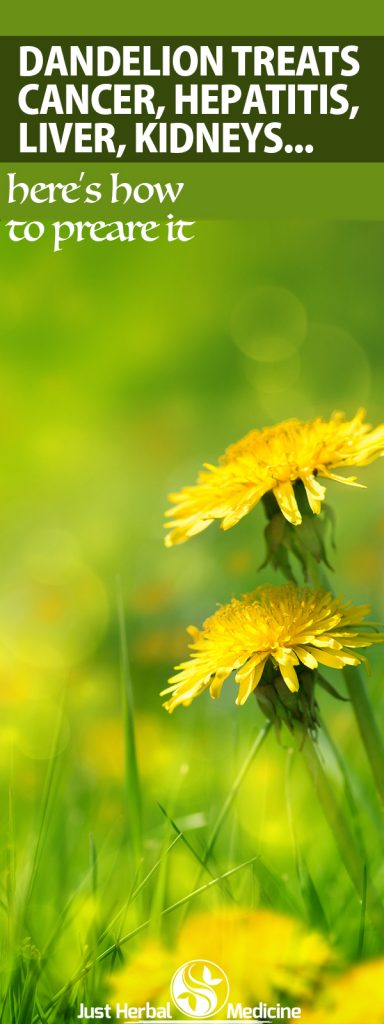 Dandelion Cures Cancer, Hepatitis, Liver, Kidneys, Stomach … Here's How To Prepare