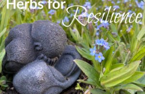 Herbs for Resilience : Inexperienced Path Herb College