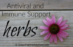 Antiviral and Immune Help Herbs : Inexperienced Path Herb College