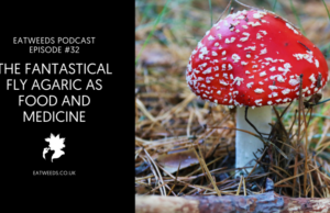 The Fantastical Delights of Fly Agaric As Meals and Drugs