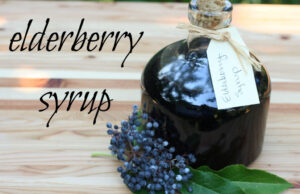 Elderberry Syrup : Inexperienced Path Herb Faculty