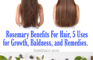 Rosemary Advantages For Hair Development, 20+ Primary Suggestions, Advantages,